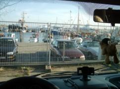 Blick auf den Fischereihafen vom SP aus