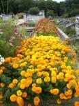 in der Gärtnerei