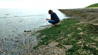 Neuharlingersiel endlich Muscheln sammeln