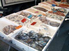 Bibione Markt Fische