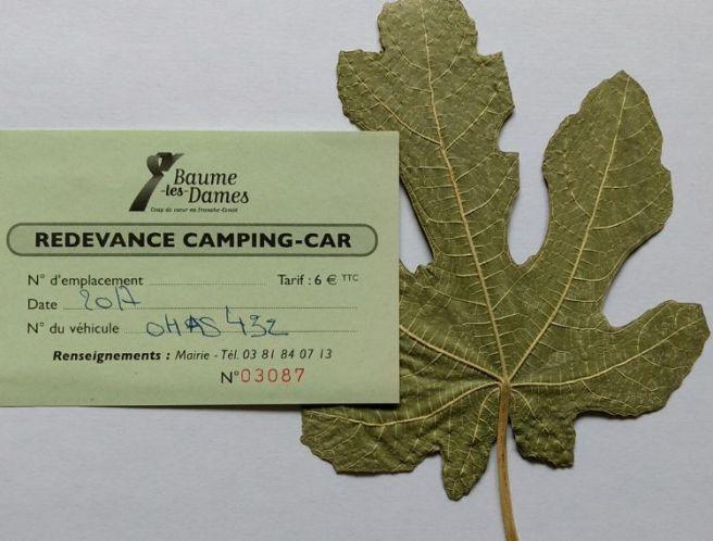 Provence 2008-Baum