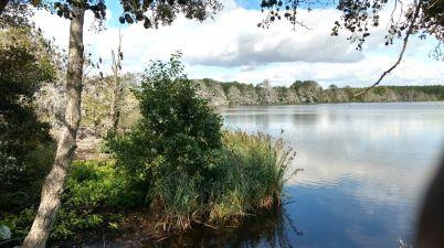 Waren Warnker See mit Kormoran Siedlung