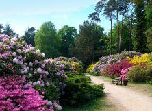 Graal-Müritz_Rhododendronpark