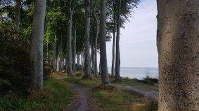Heiligendamm Küstenwald