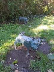 Waldmopspaare am Humboldthain (3)